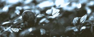 Photo by A Fox on unsplash.com